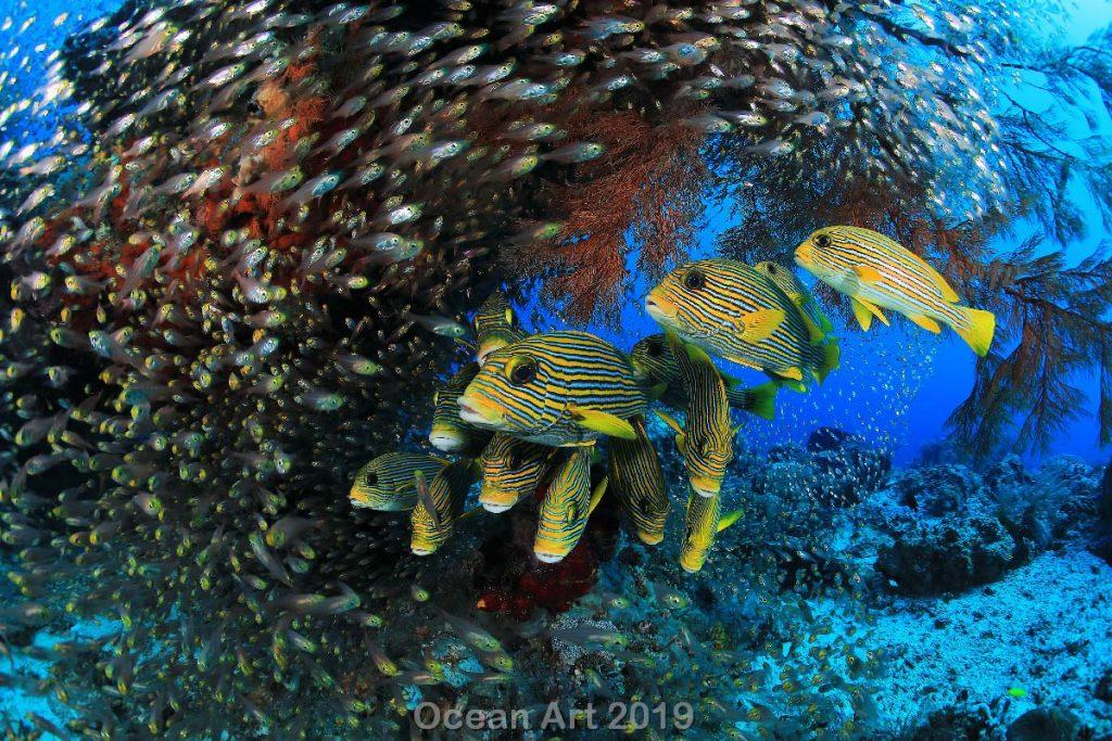Estas imágenes son las ganadoras del concurso de fotografía submarina de 'Ocean Art'. Peces amarillos.