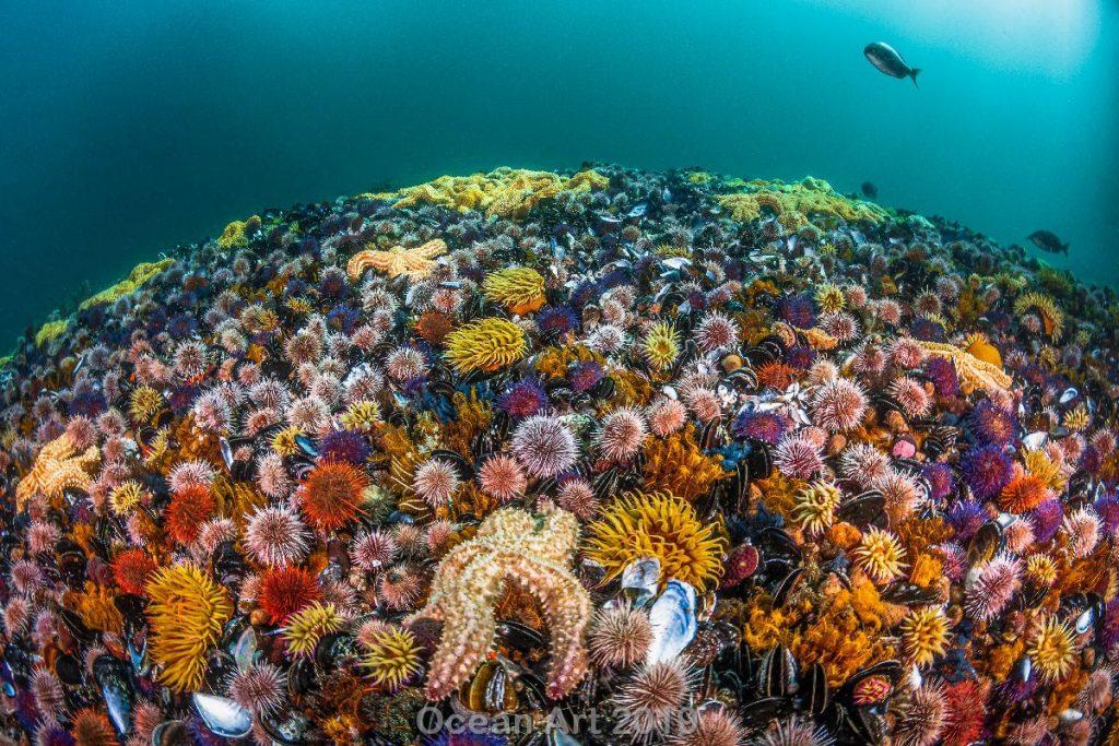 Estas imágenes son las ganadoras del concurso de fotografía submarina de 'Ocean Art'. Flora marina.