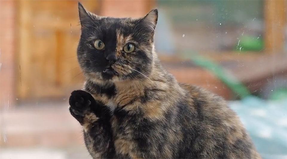 Gràffica te recomienda… un vídeo de gatos vs. coronavirus