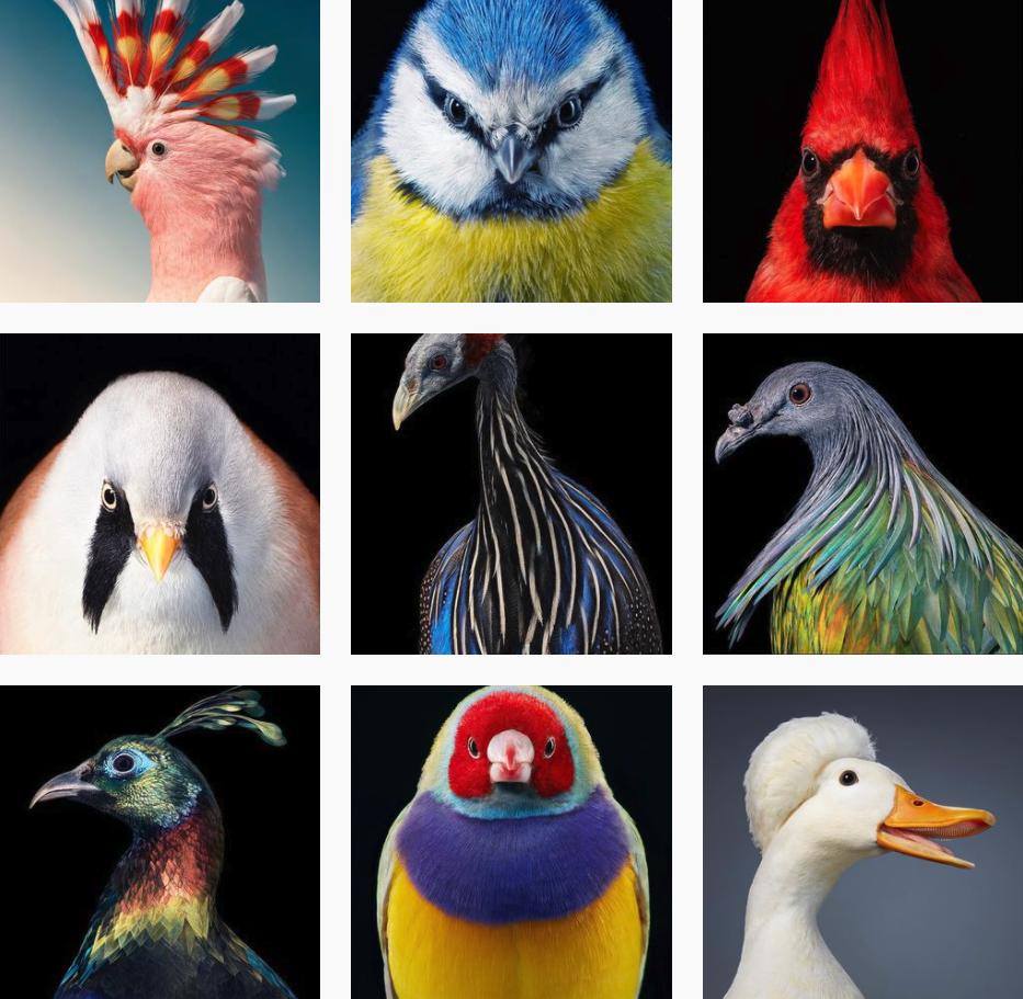 Fotografías de aves de Tim Flach
