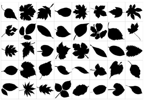 hojas-vectoriales